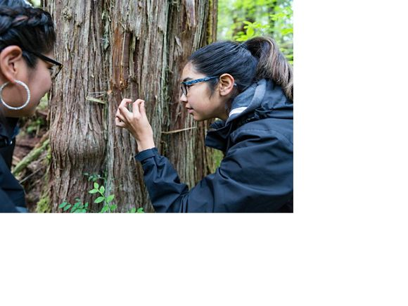 Two people examine tree bark