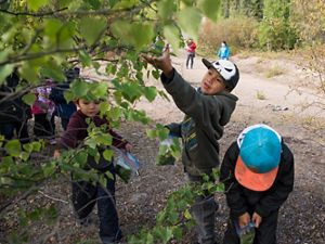 children looking at tree branches