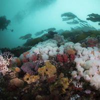 A diver explores this underwater park near Hurst Island, BC.