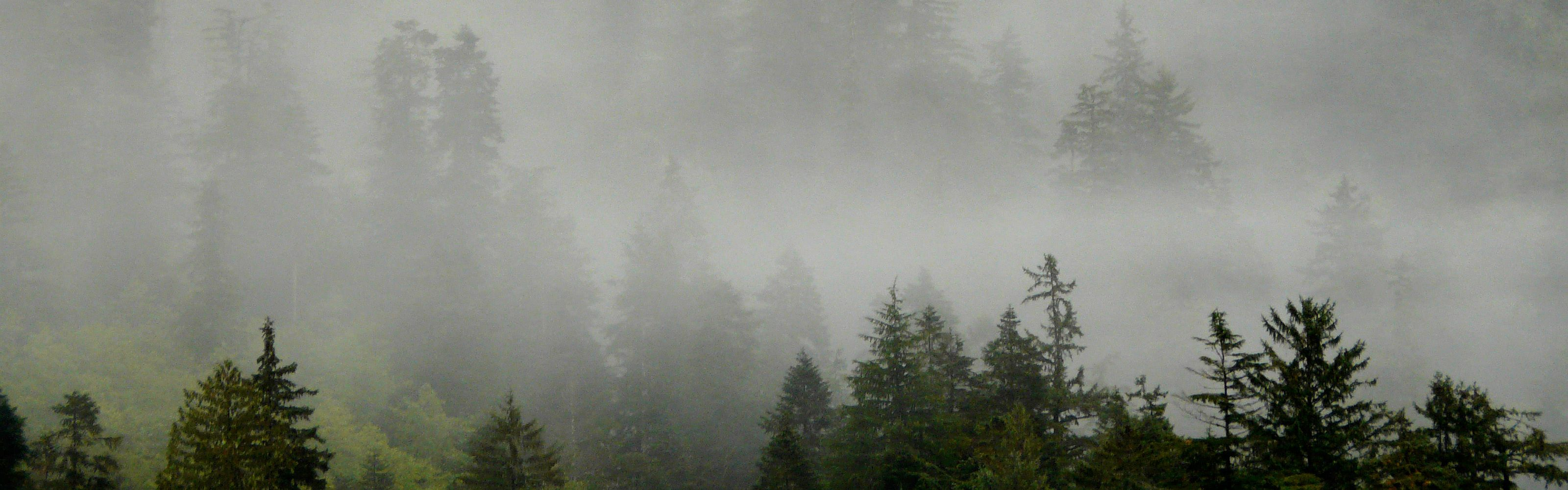 Fog and rain shrouds the Pacific coastline of the Great Bear Rainforest in Canada.