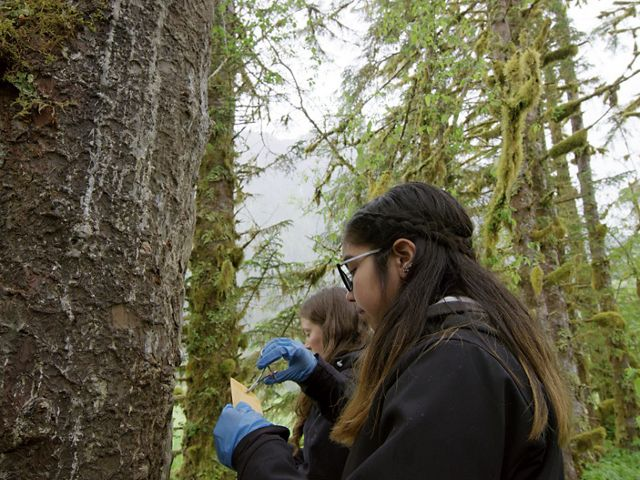 Mercedes Robinson-Neasloss tracks grizzly bears by collecting hair from trees.