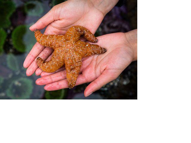 Starfish in a tidepool near Klemtu, British Columbia, Canada.