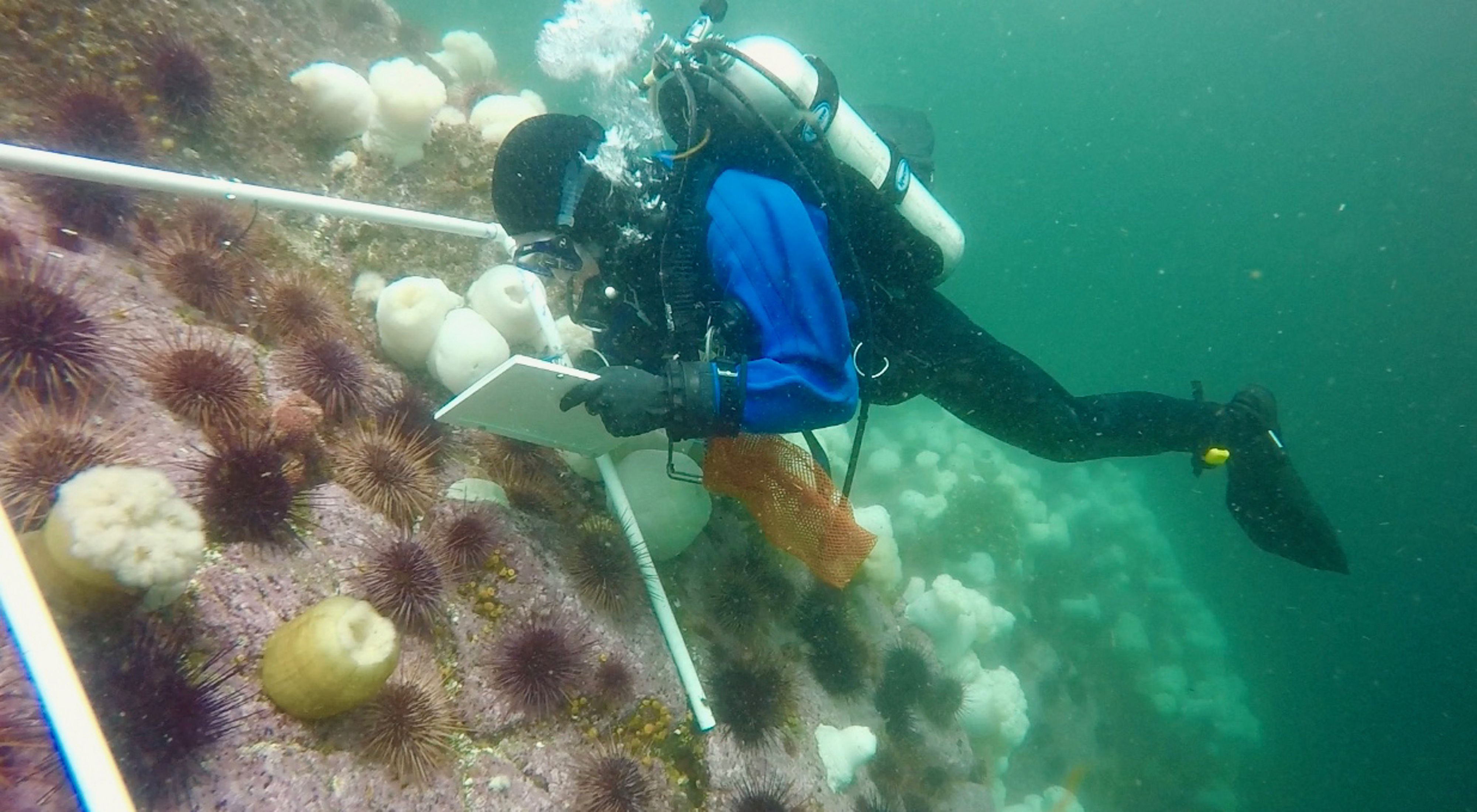 BC海洋部负责人Jenn Burt在大熊海水下进行了数不清的研究。