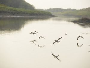 birds flying over a misty wetland