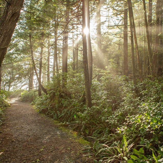 Sunbeams shine on a trail in Tofino, British Columbia