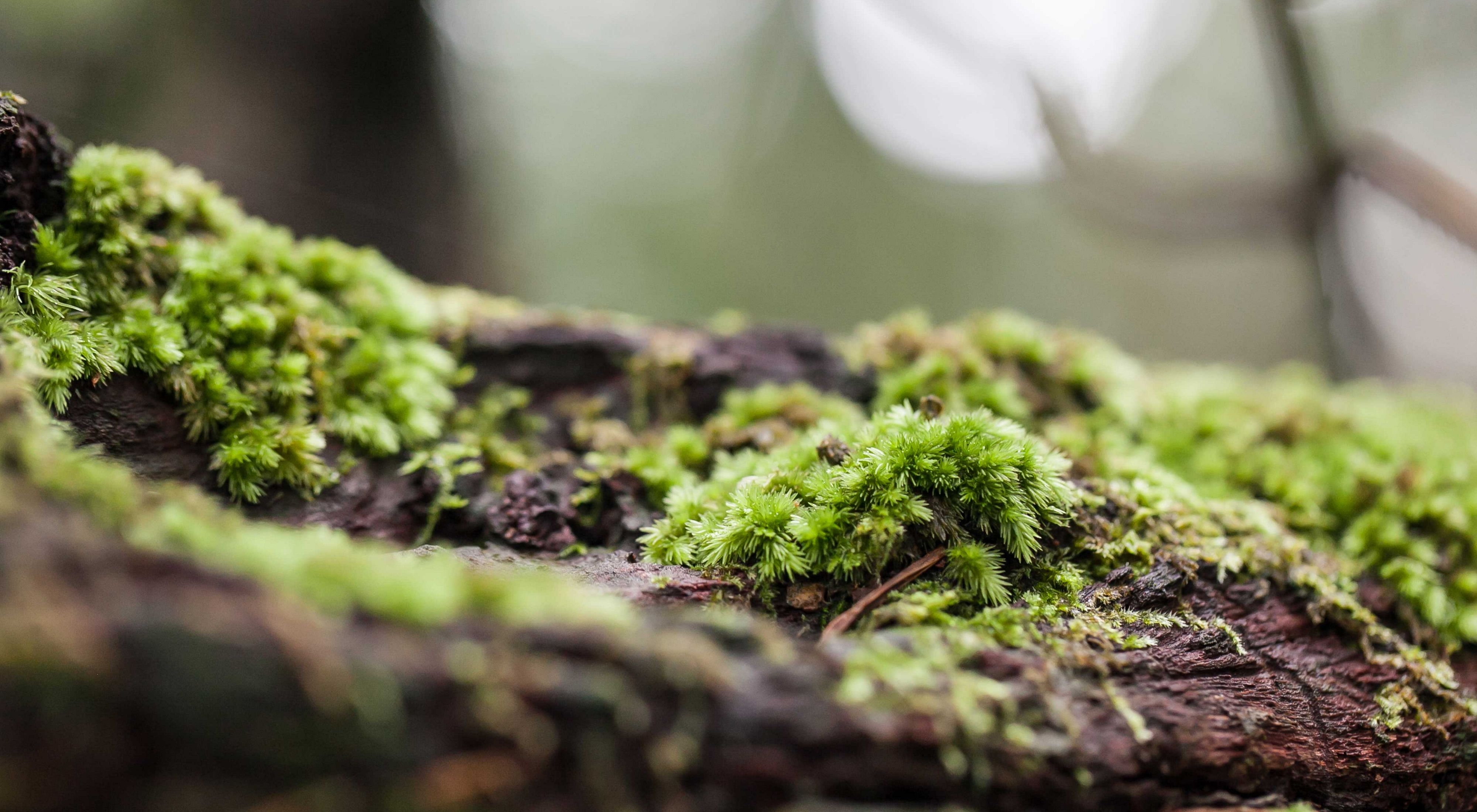 close up of mossy log on forest floor