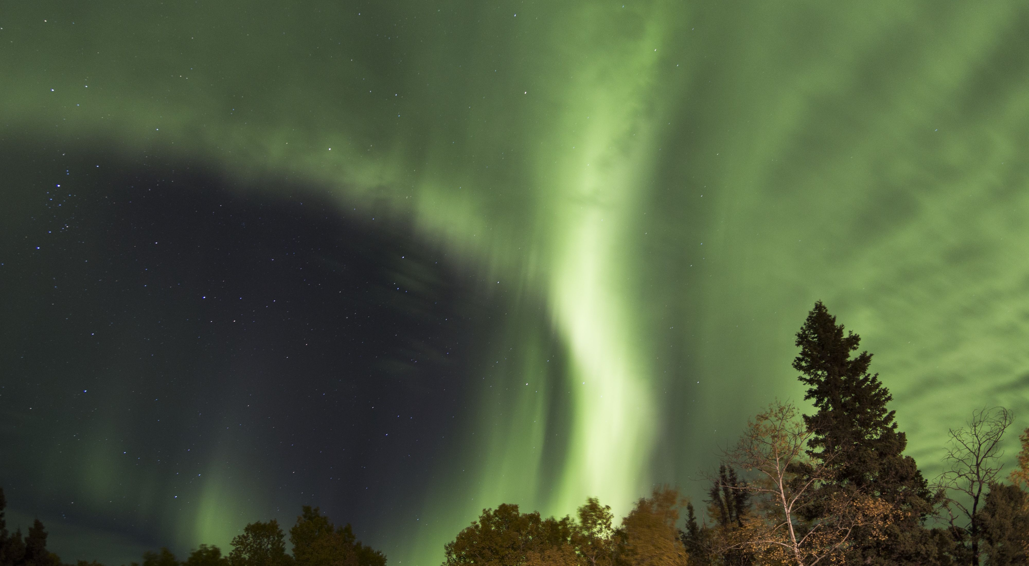 In northern Manitoba, the aura borealis shines over the boreal forest.