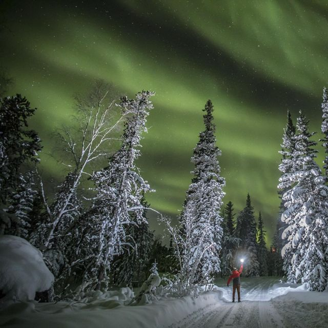 A person holds a light ball to illuminate the snowy trees under the northern lights in Northwest Territories, Canada.