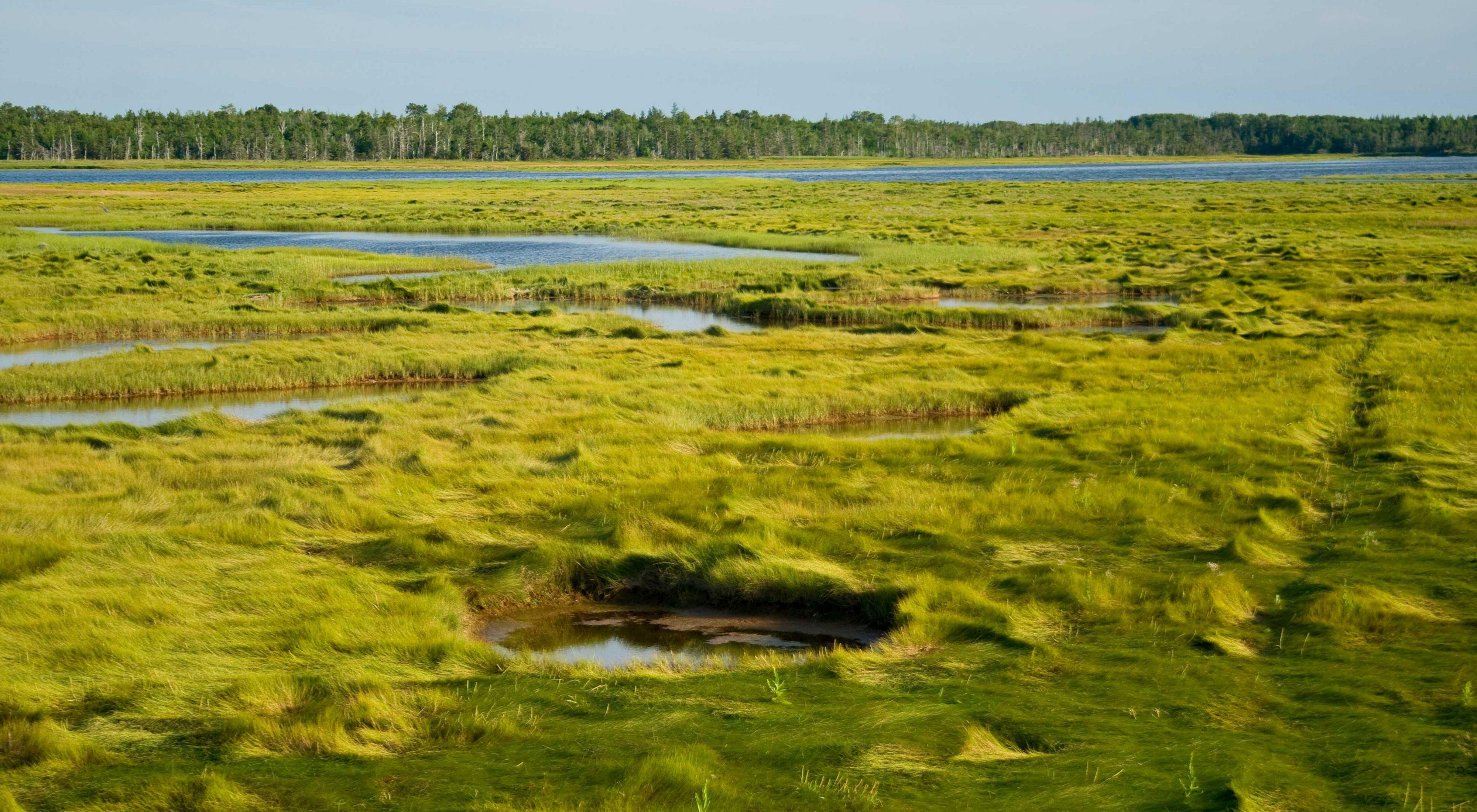 加拿大爱德华王子岛涨潮时的绿色盐沼。