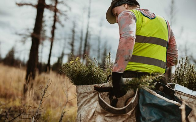 Male tree planter wearing reflective vest walking in forest carrying bag full of trees.