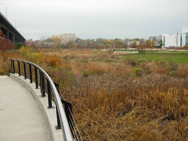 Brown wetland vegetation alongside a concrete pad with fence with highway bridge and city buildings in the distance.