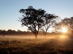 Agricultural expansion and intensification threaten South America's largest tropical dry forest.