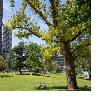 People within Melbourne find shade beneath trees.