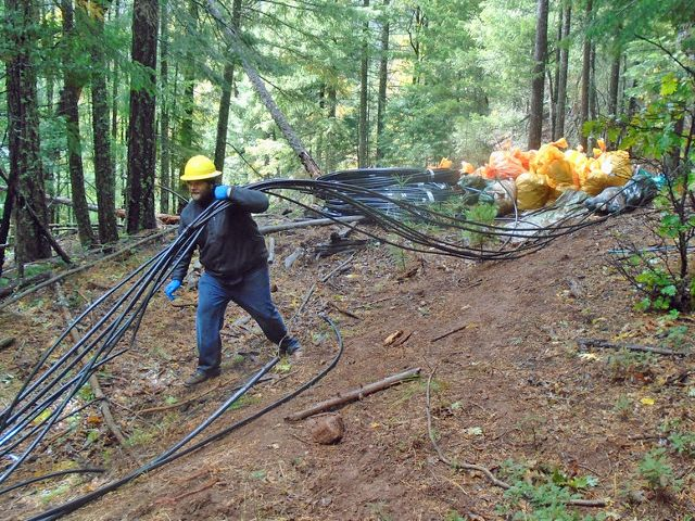 A USFS employee cleans up irrigation equipment from illegal marijuana farm