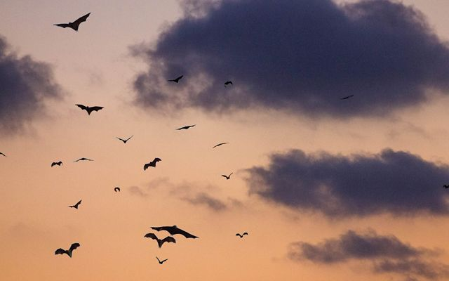 Bats take to the air each evening