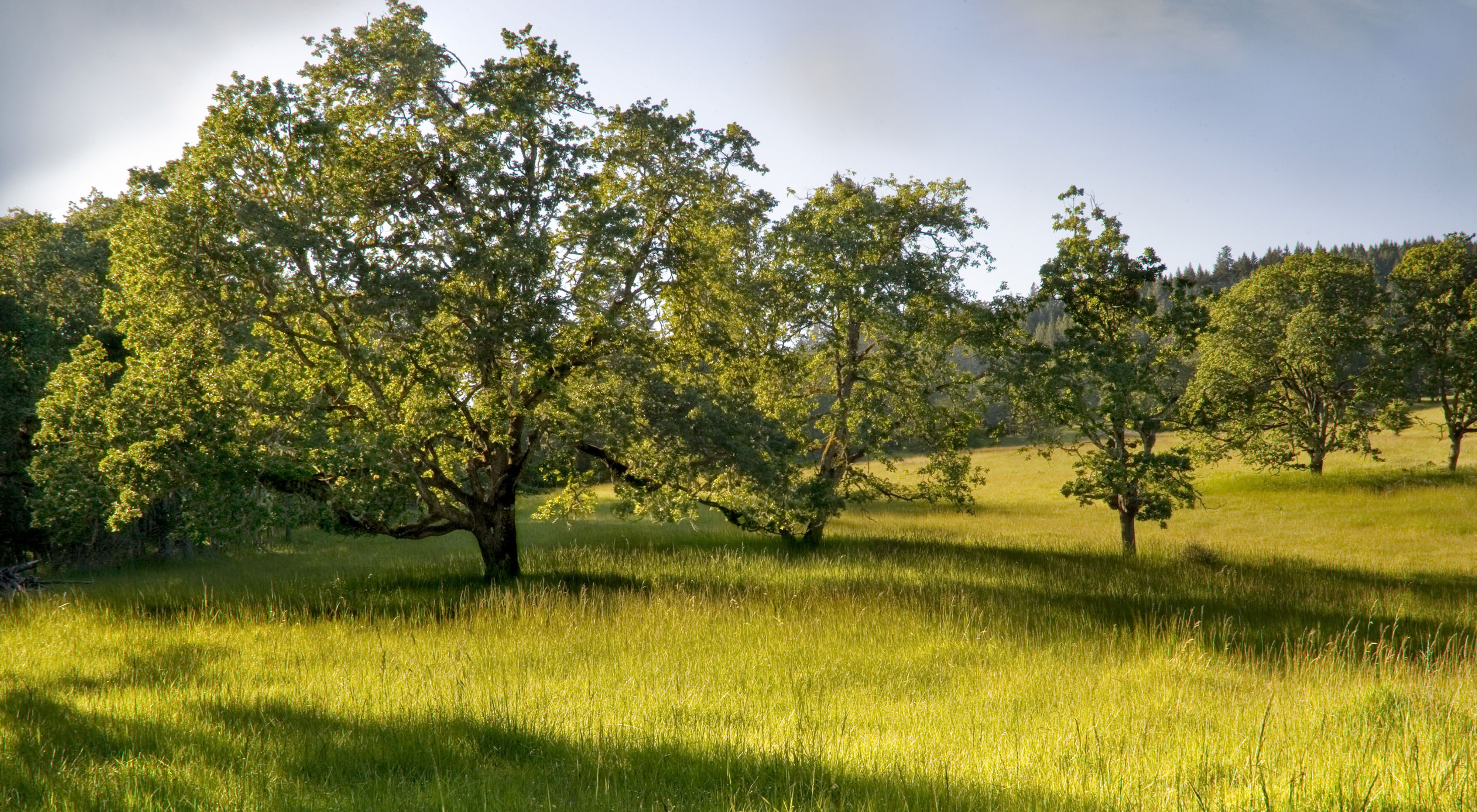 Coburg Ridge Preserve, in the heart of the Willamette Valley's oak and prairie habitats.