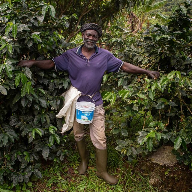A coffee farmer in the Blue Mountains of Jamaica