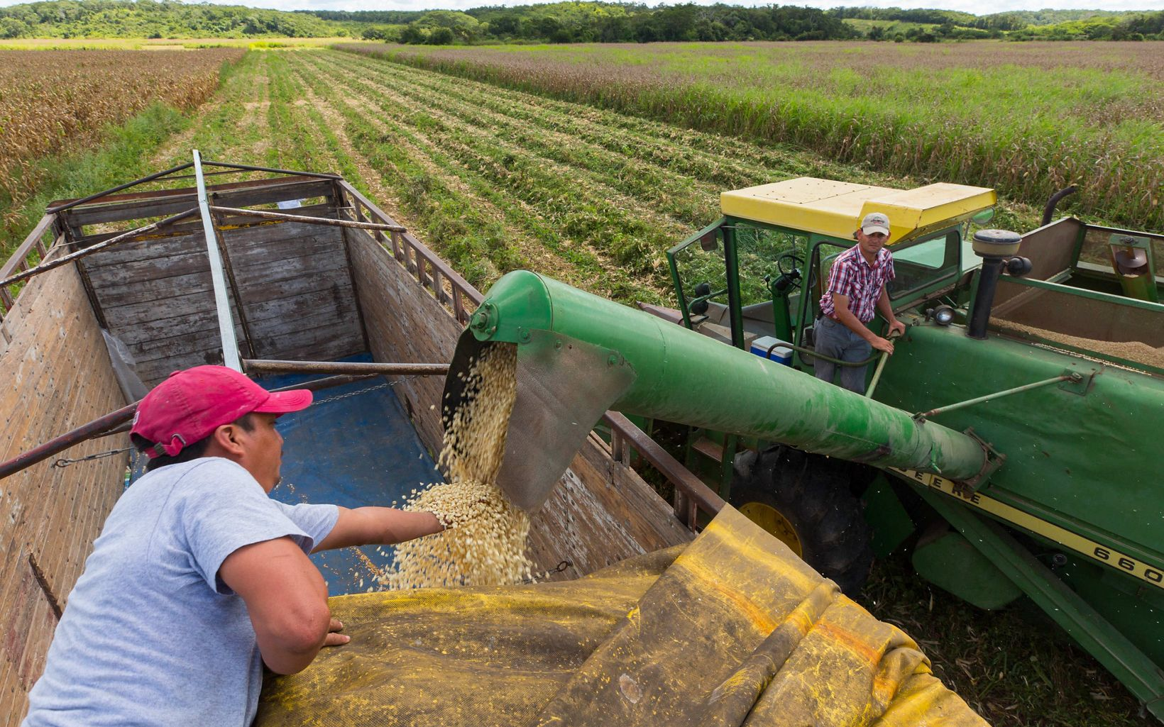 Truck driver Luis Maas Caamal checks out the corn being unloaded