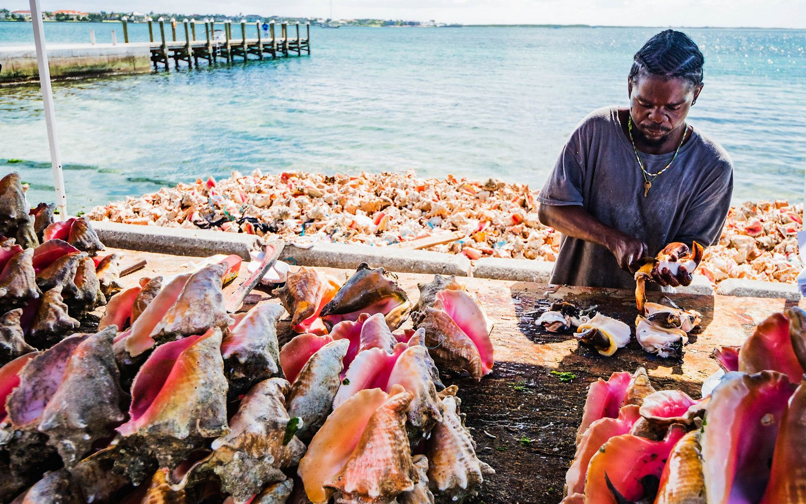 A Bahamian fisher de-shells queen conchs