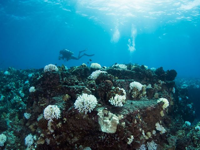 Two SCUBA divers with clipboards swim over a coral reef with a large, prominent bleached white coral.