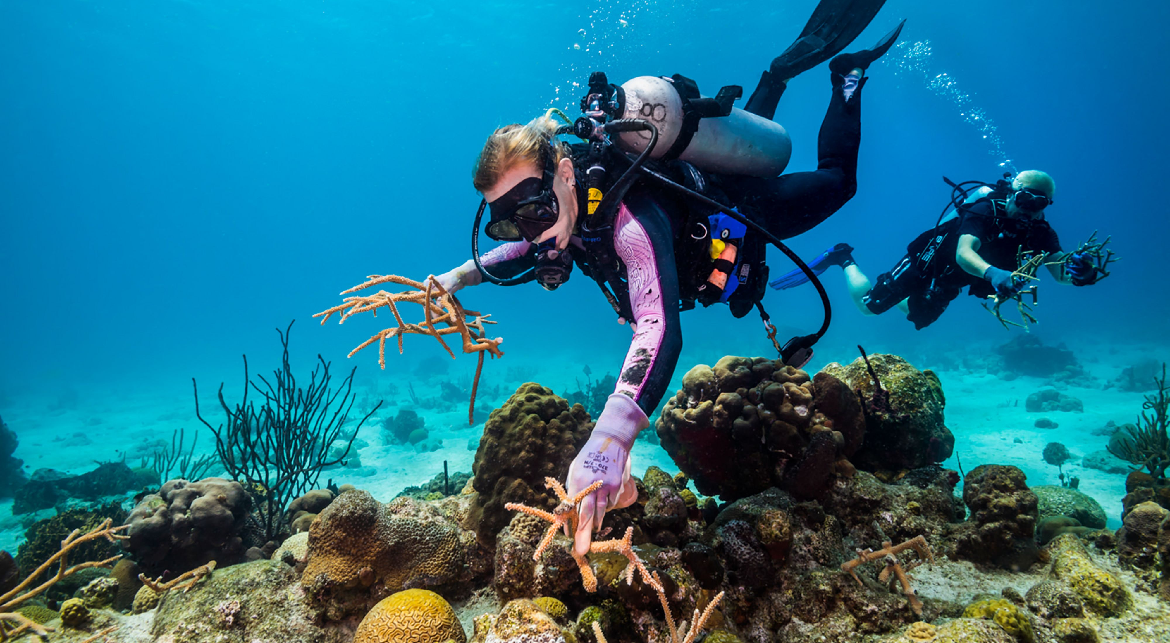 TNC coral science team works to restore damaged reef in U.S. Virgin Islands.
