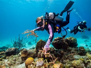 TNC coral science team works to restore damaged reef.