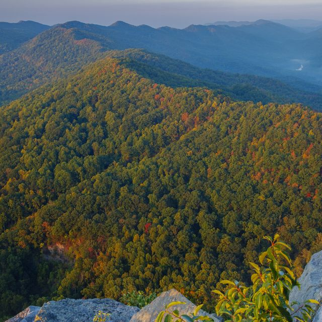 A forested mountain with colorful fall leaves.