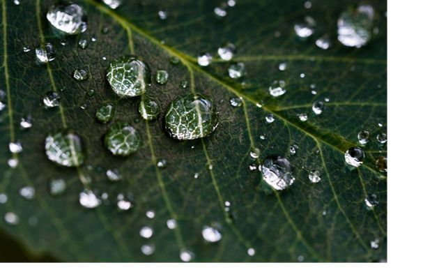 Macro view of water droplets on a leaf