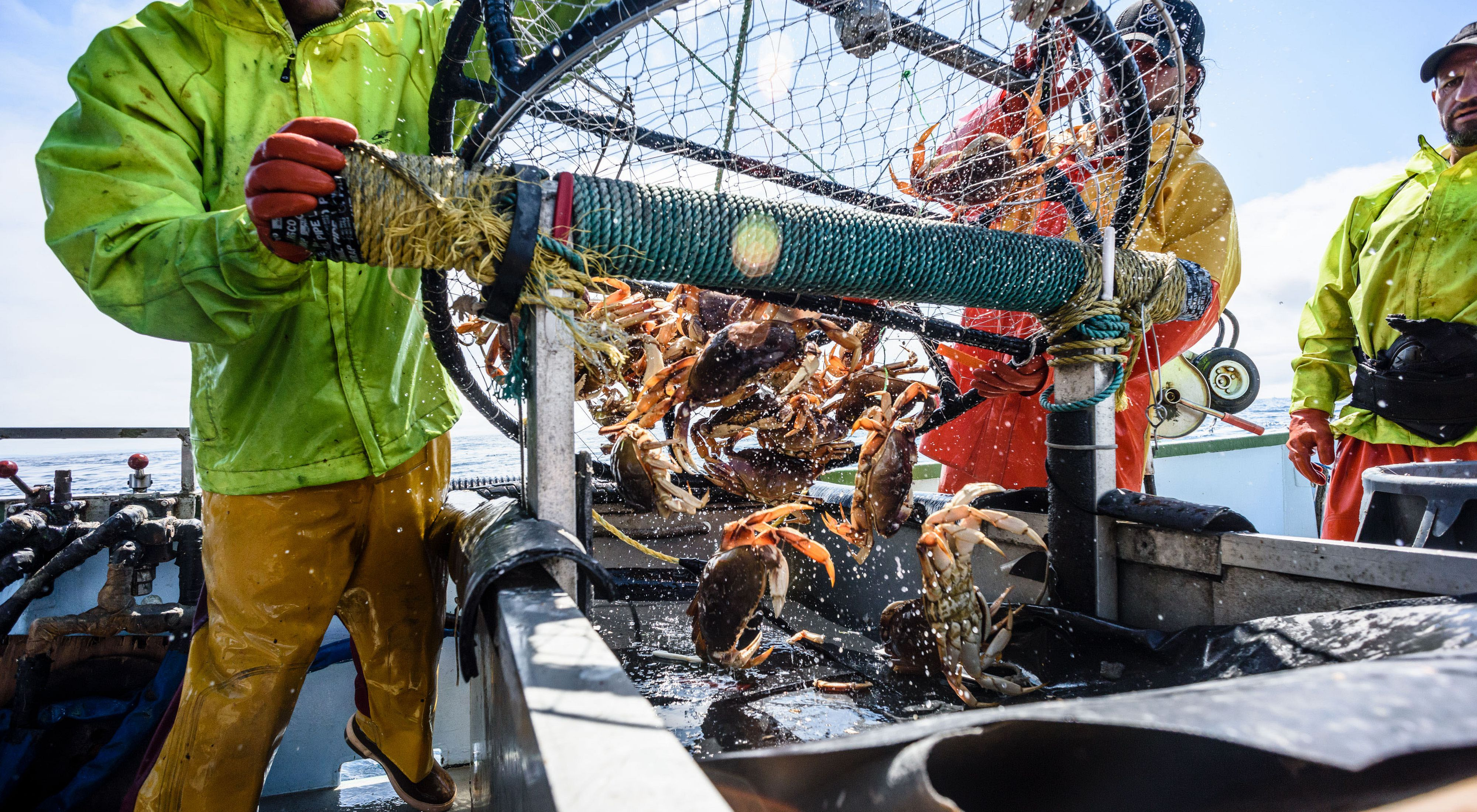Photo of two commercial fishermen hauling in a net full of crabs.