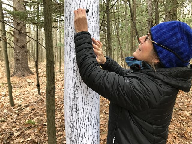 Elizabeth billings in a jacket and hat rubbing charcoal on paper to record the texture of tree bark.