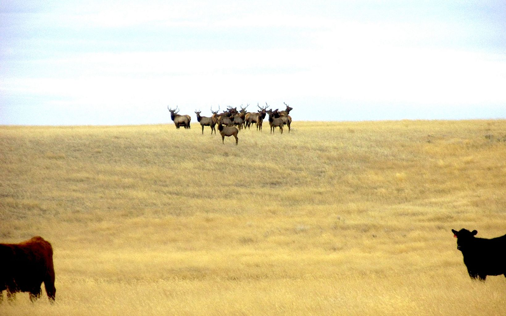 TNC's goal is to conserve grassland through direct land protection and partnership with the local ranching community.