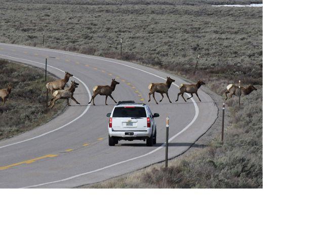 Wyoming roadway.