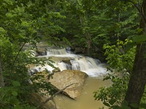 Cedar falls can be seen along the Helen C. Black Trail within the Edge of Appalachia Preserve System in Adams County.