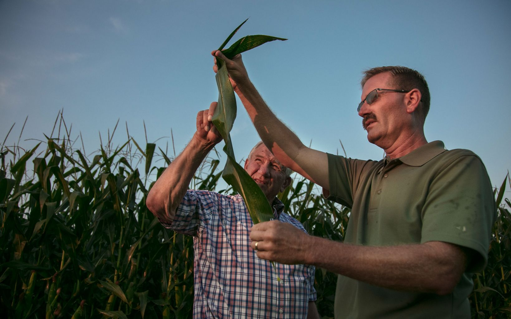 Farmers David Myerholtz (right) and his father Lowell Myerholtz (left) inspect the leaves of their corn plants for insects, parasites and disease at the Myerholtz Family Farm outside of Gibsonburg, Ohio. August 03, 2017. David Myerholtz is an active member of TNC's 4R's Nutrient Stewardship Program where farmers follow a  precision nutrient management plan that allows them to apply the minimum about of fertilizer (nutrients) so that runoff from their farms is minimized and does not contribute to algal blooms in Lake Erie. TNC's Great Lakes Program.