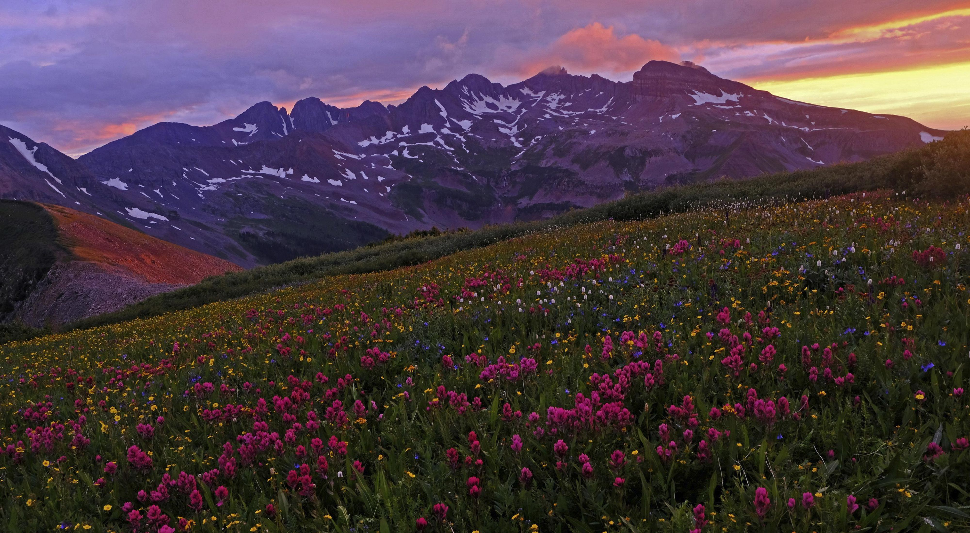 Colorado mountain range with wildflowers in the foreground.
