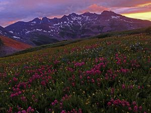 Mountain range with wildflowers in the foreground.