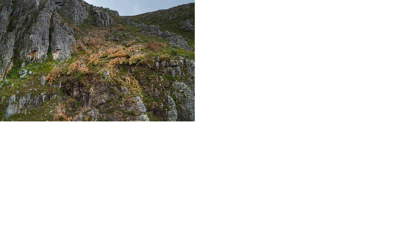 The result of invasive pine removal within the Greater Cape Town Region.