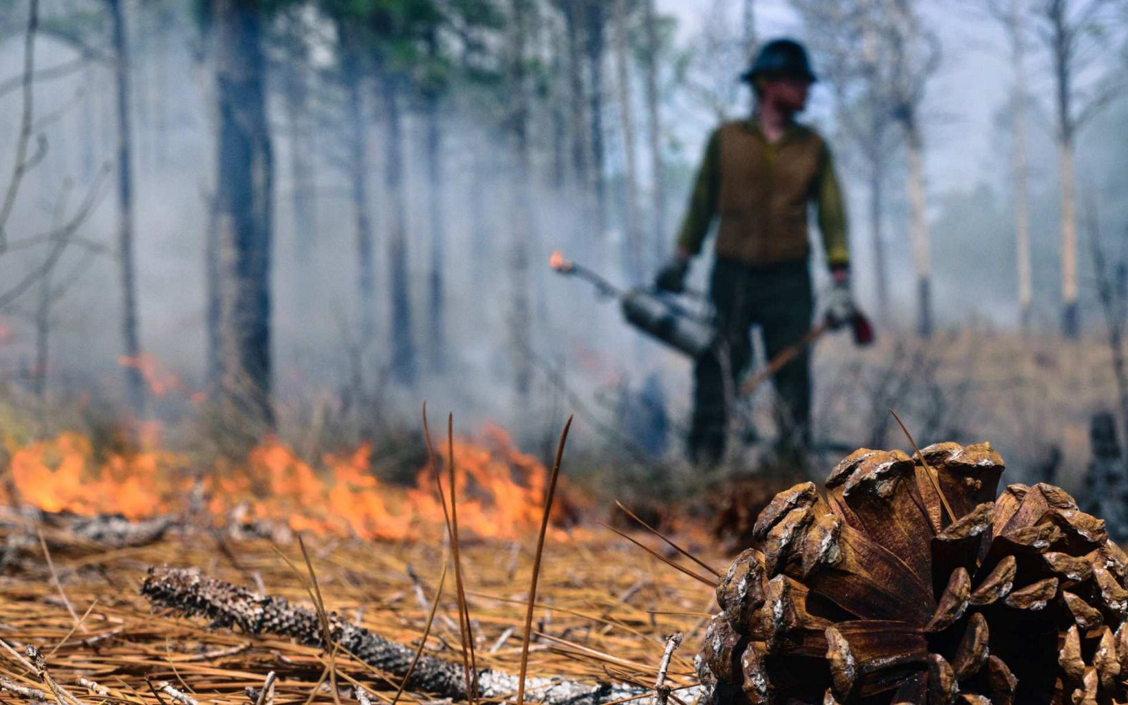a firefighter stands with a drip torch in a forest