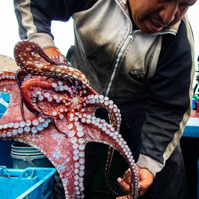 Man holding and octopus standing on a boat