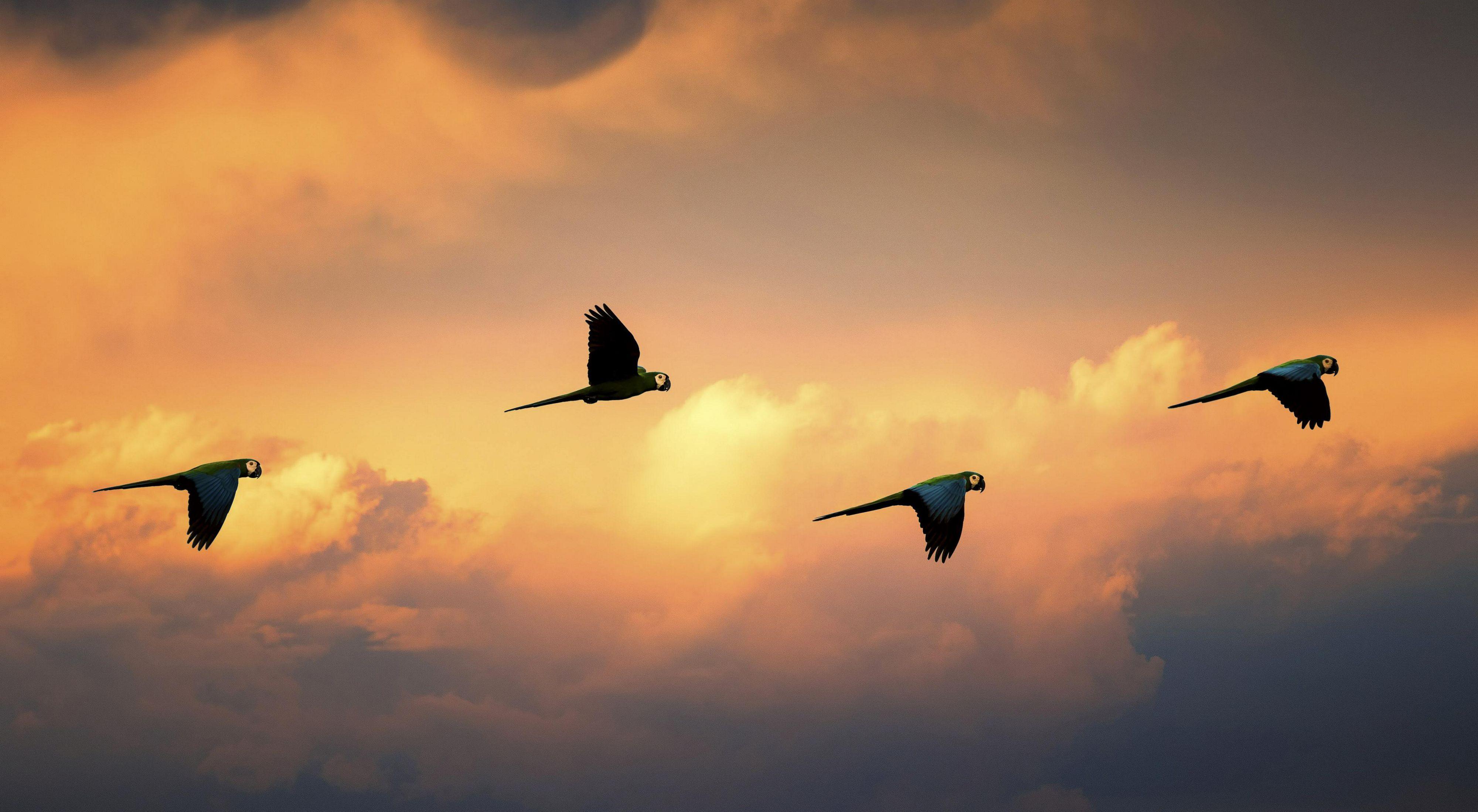 pájaros en Colombia