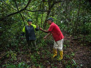 Blanca Raquel aisla las áreas de pastoreo de los bosques instalando cercas eléctricas y así evitar que sus vacas traspasen los ecosistemas sanos de su finca.