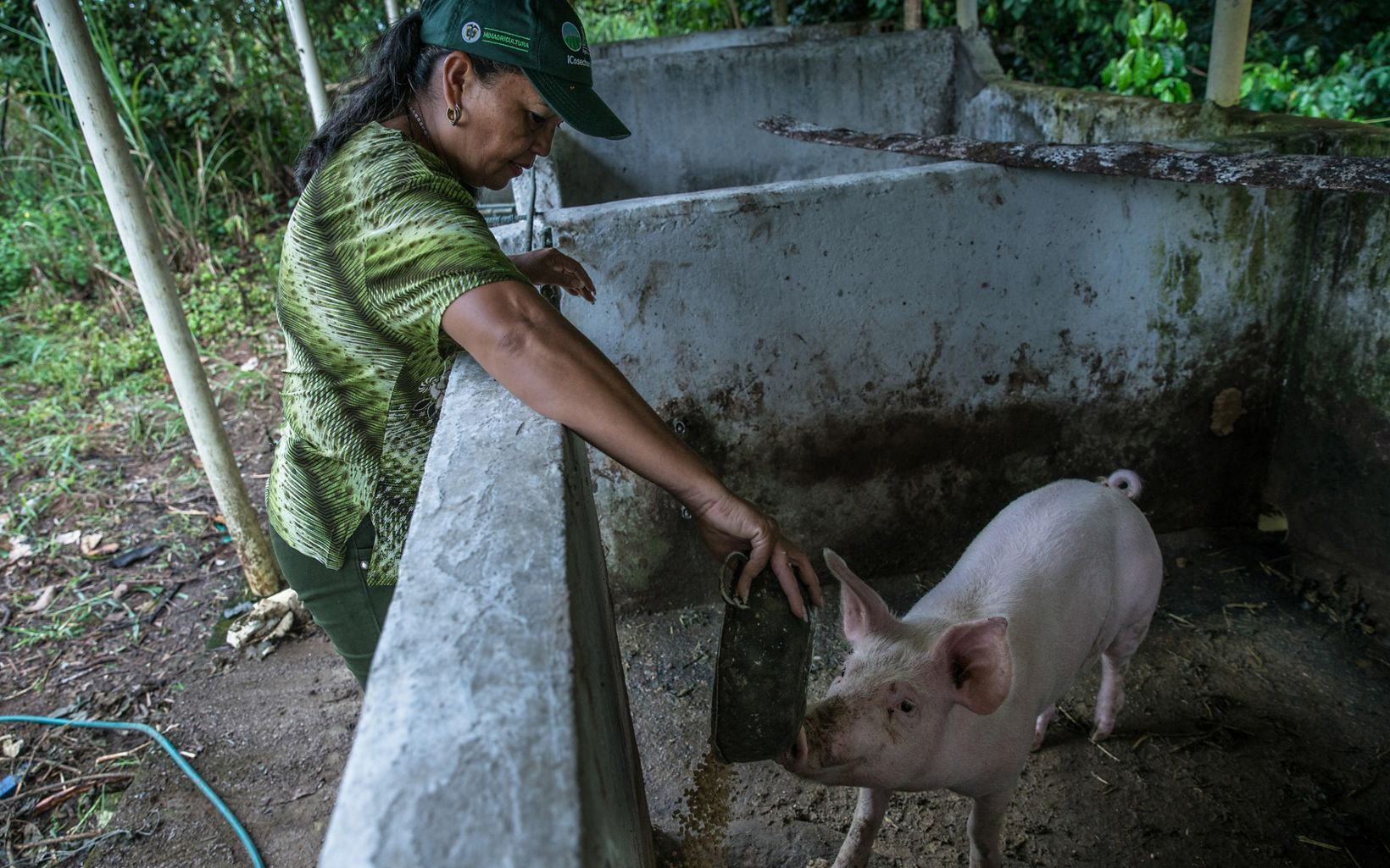 Proteger los ecosistemas garantiza mejor alimento para el ganado, menos plagas y reducción de emisiones de gases de efecto invernadero.