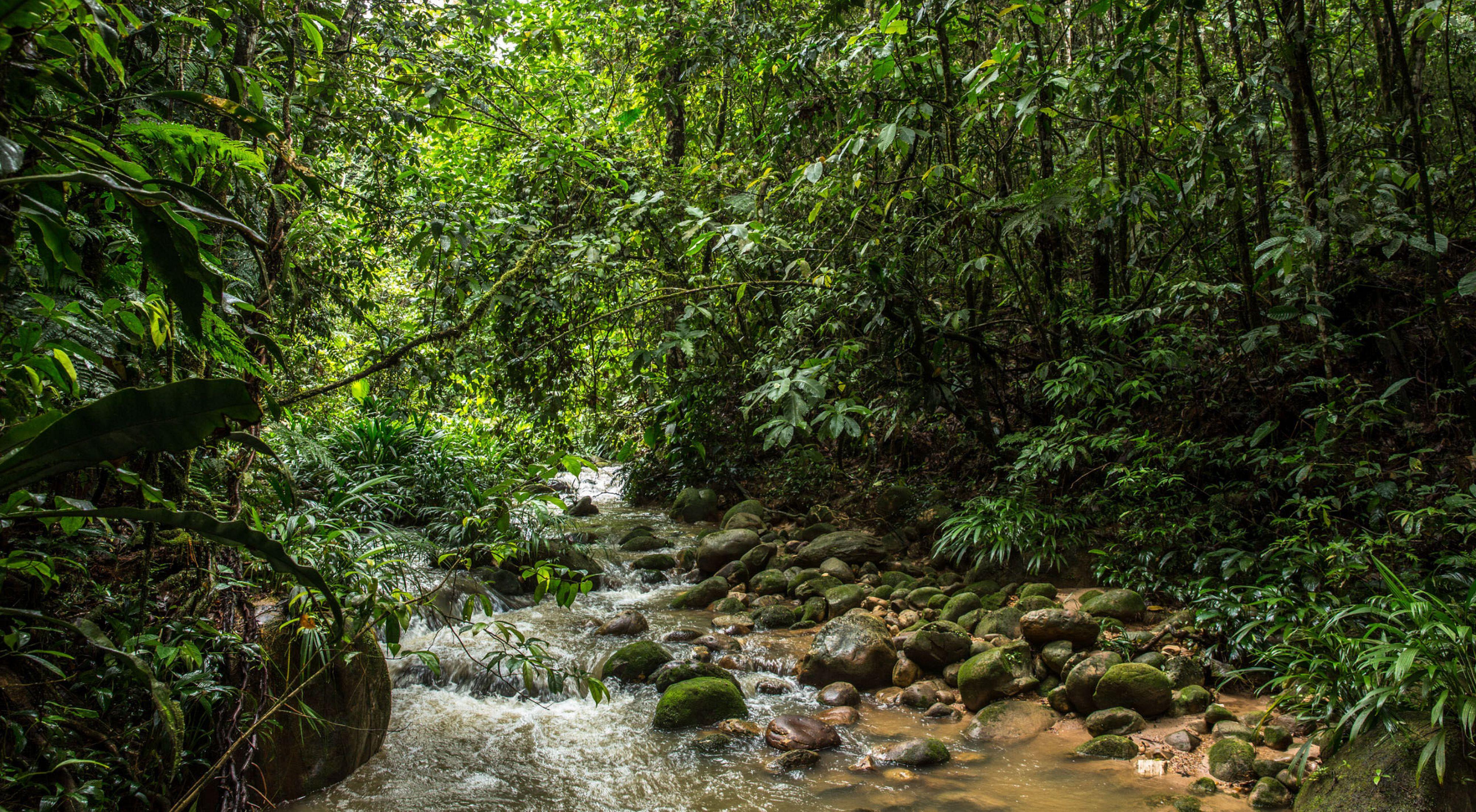 Proteger los nacimientos de la región más poblada de la Orinoquia colombiana