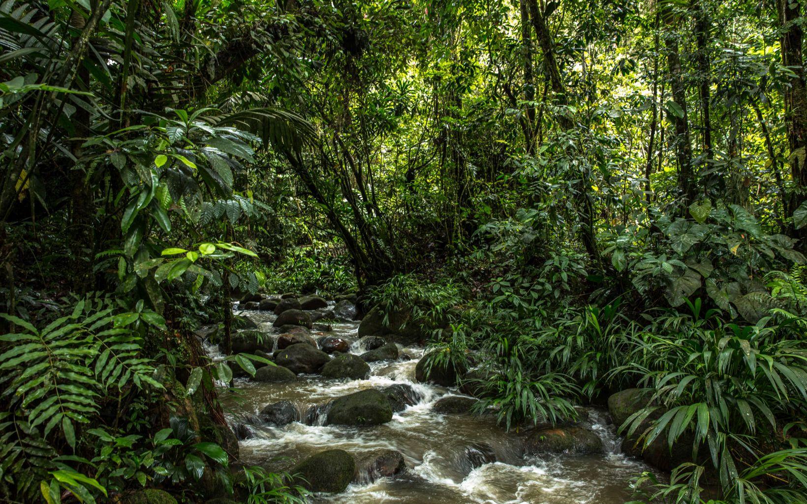 Blanca Raquel tiene muy claro que proteger la naturaleza es el mejor negocio posible, y que es una buena alternativa a largo plazo para los productores de escasos recursos.