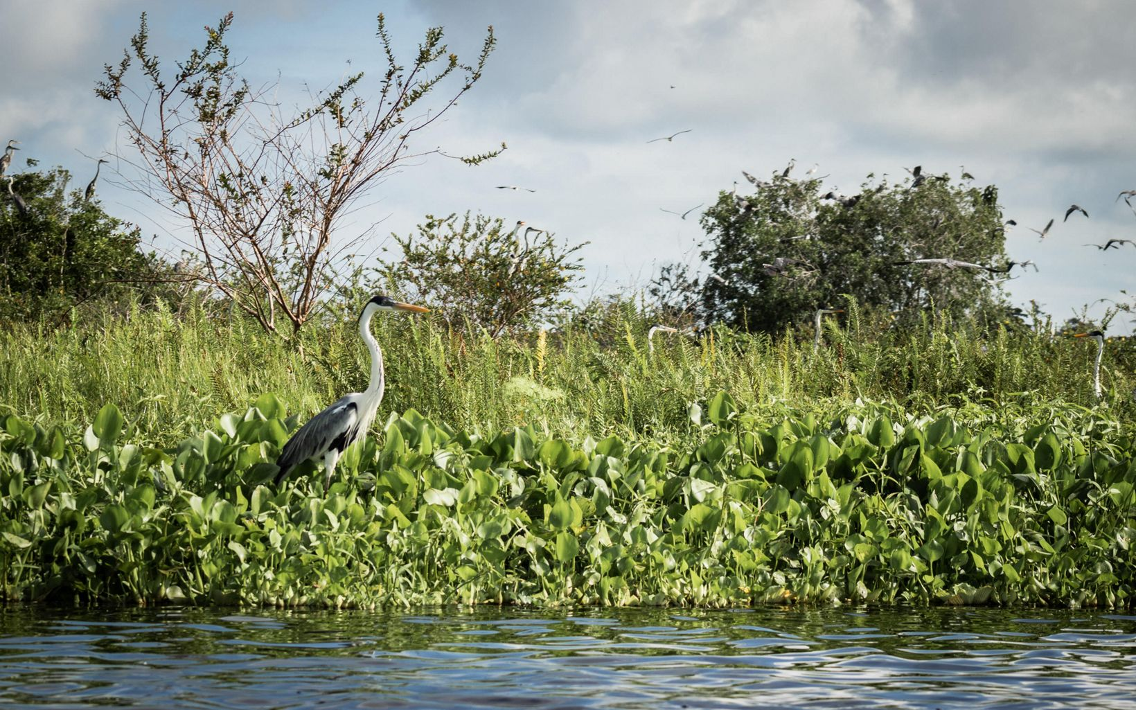 Se registraron 522 especies de aves que se beneficiaron con las implementaciones del proyecto en las 5 áreas donde se ejecutó.