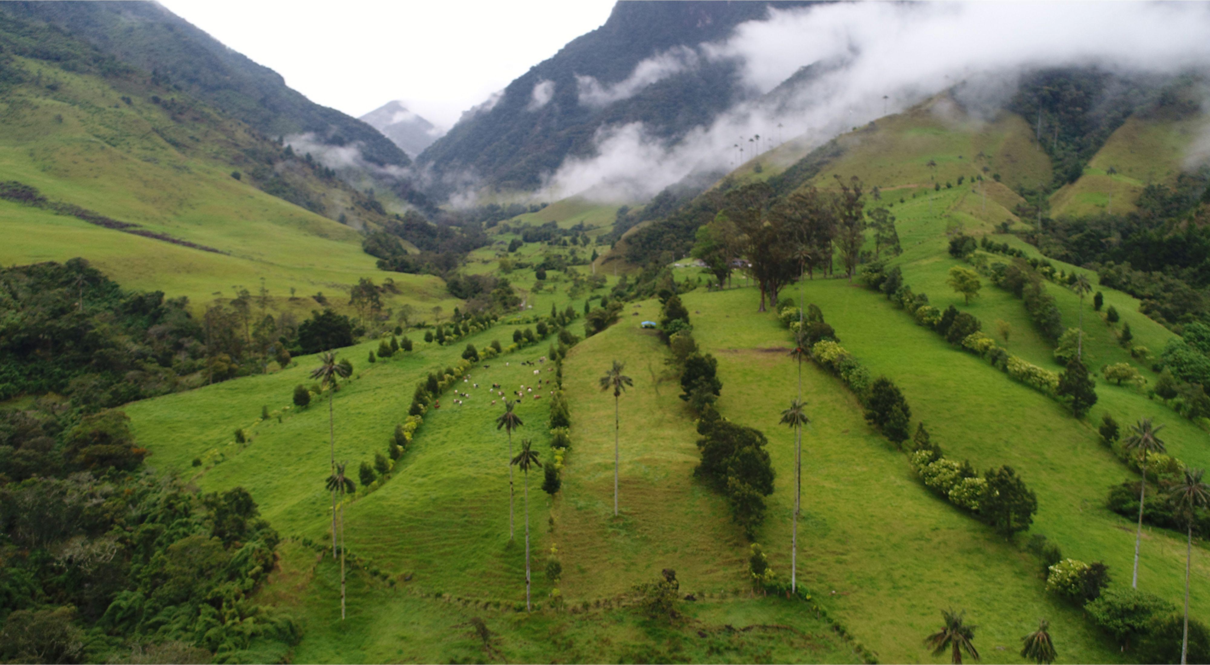Este predio ganadero en Quindío, Colombia, divide sus áreas con cercas vivas, planificando el suelo que aprovechará de manera responsable. Imagen de dron de monitoreo.