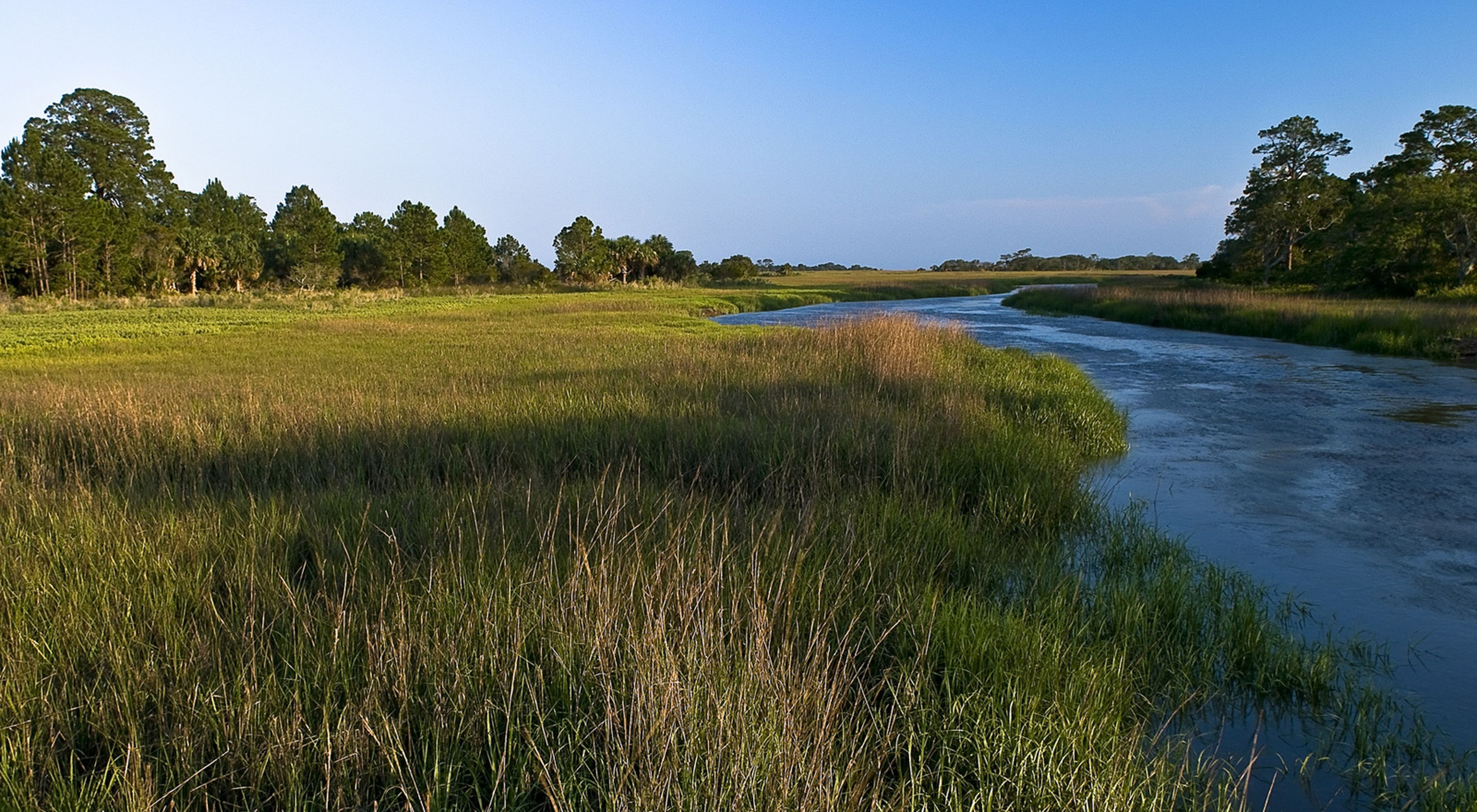 A tidal river bordered by thick marsh grasses.