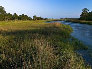 Salt marsh in sun and shadow along a Georgia waterway.