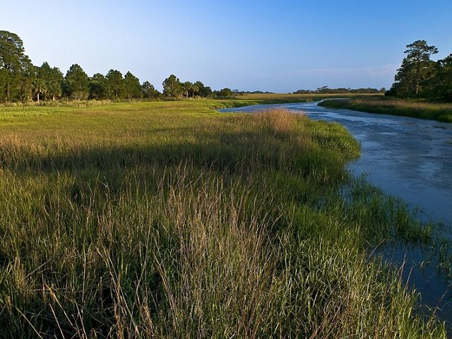 Salt marsh and hammock along Mosquito Creek border on Little St. Simons Island.