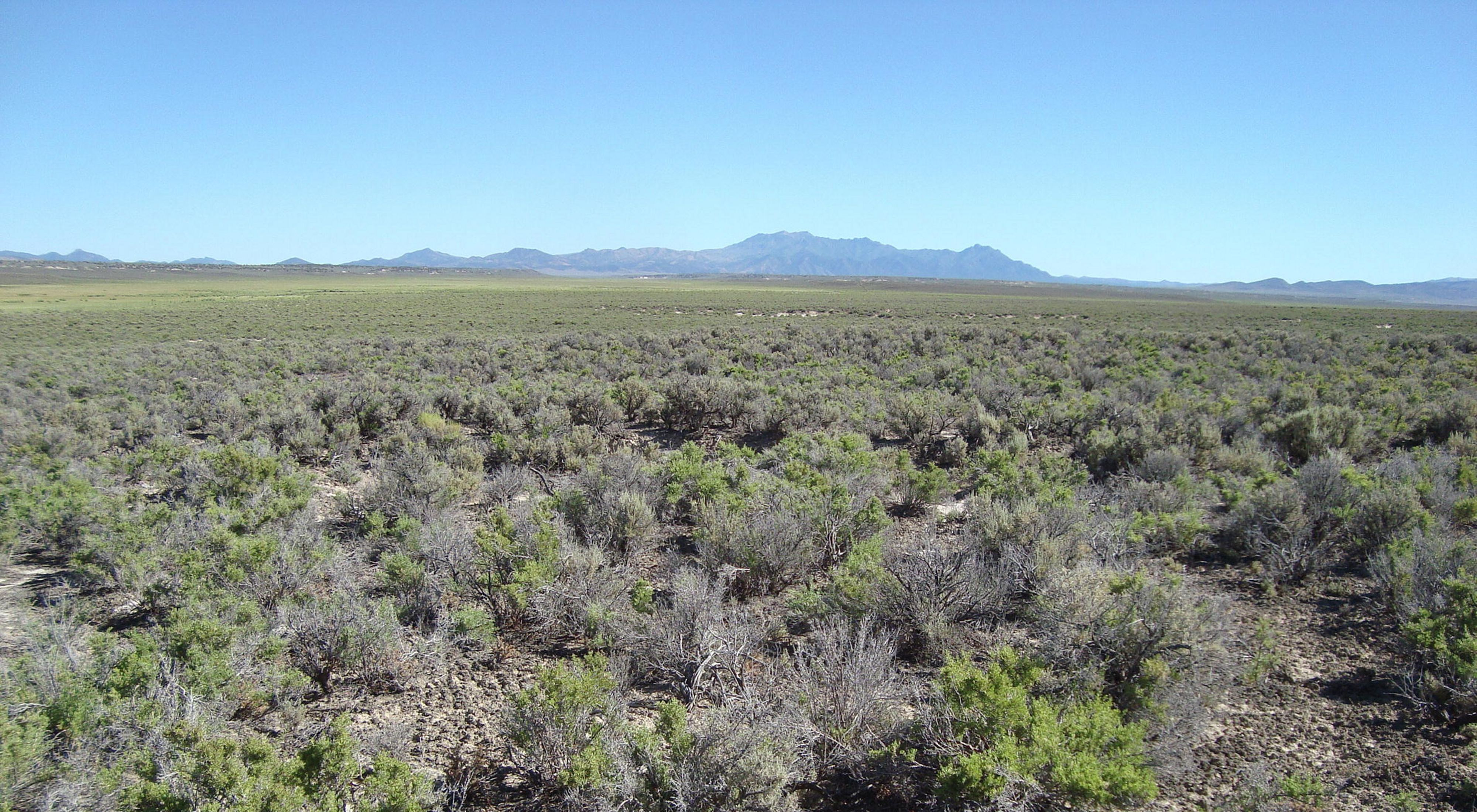 Greasewood ecosystem in Pine Valley, Nevada with the Roberts Mountains in the background.